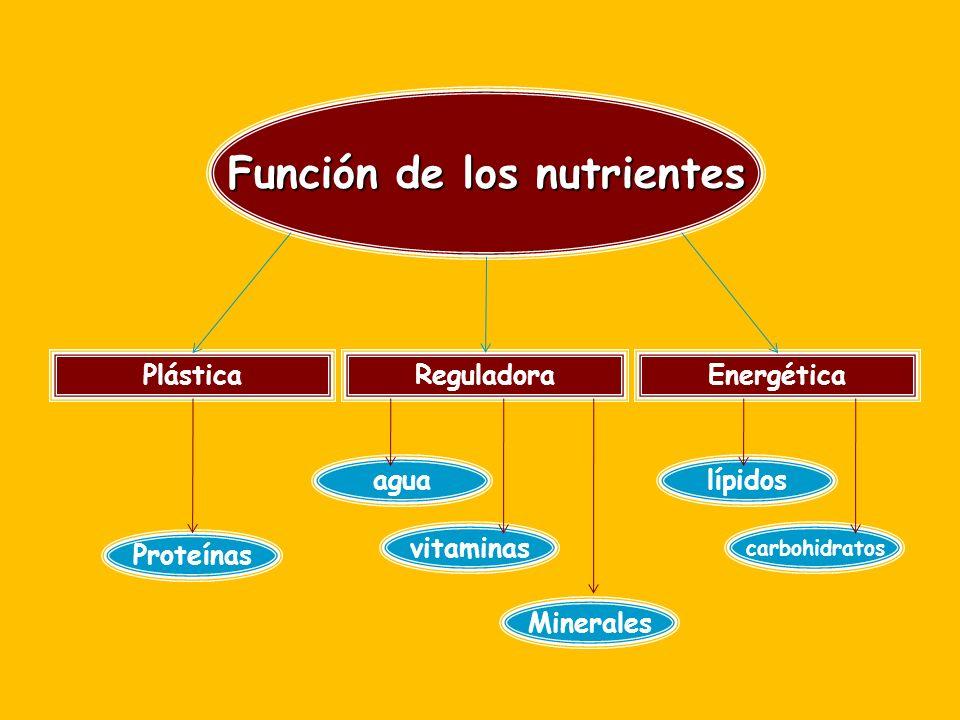 Función de los nutrientes