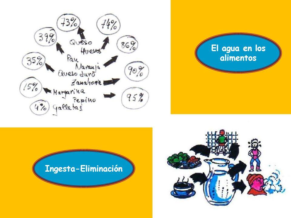 El agua en los alimentos Ingesta-Eliminación