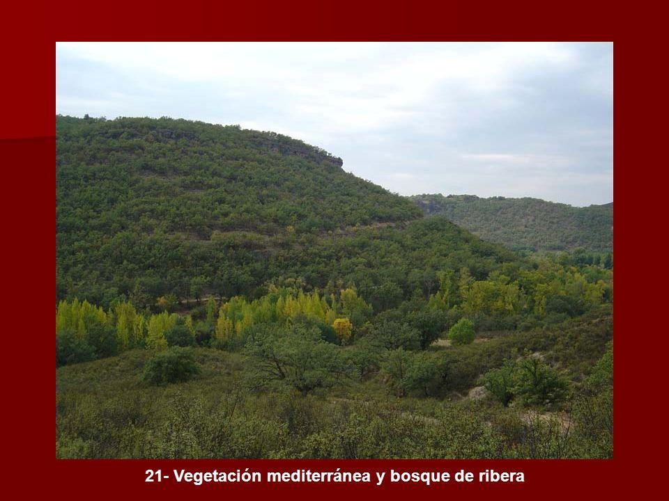 21- Vegetación mediterránea y bosque de ribera