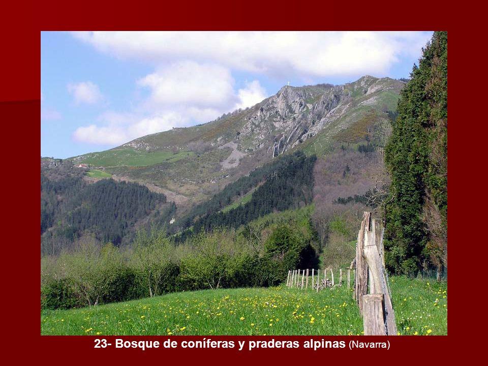 23- Bosque de coníferas y praderas alpinas (Navarra)