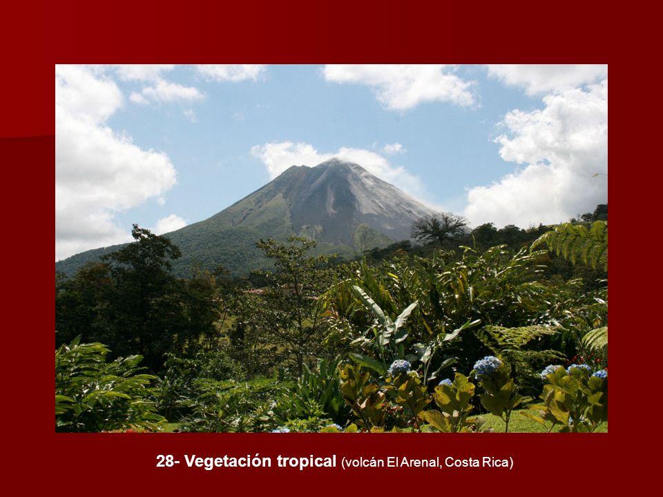 28- Vegetación tropical (volcán El Arenal, Costa Rica)