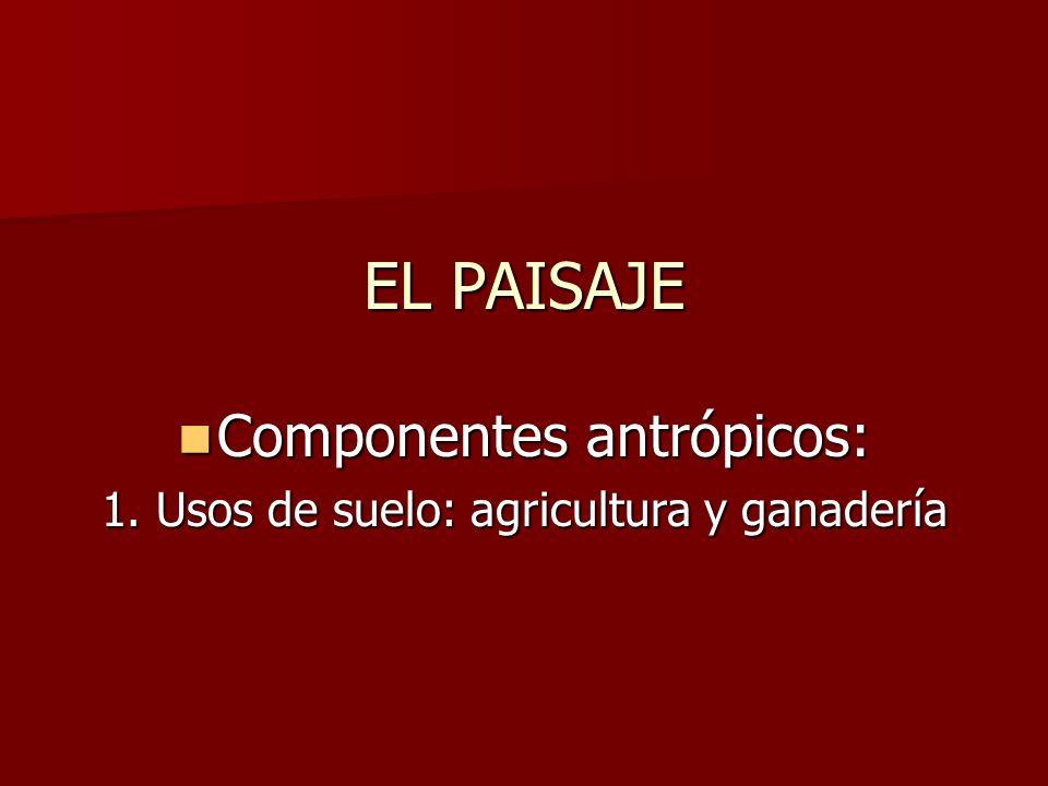 EL PAISAJE Componentes antrópicos: