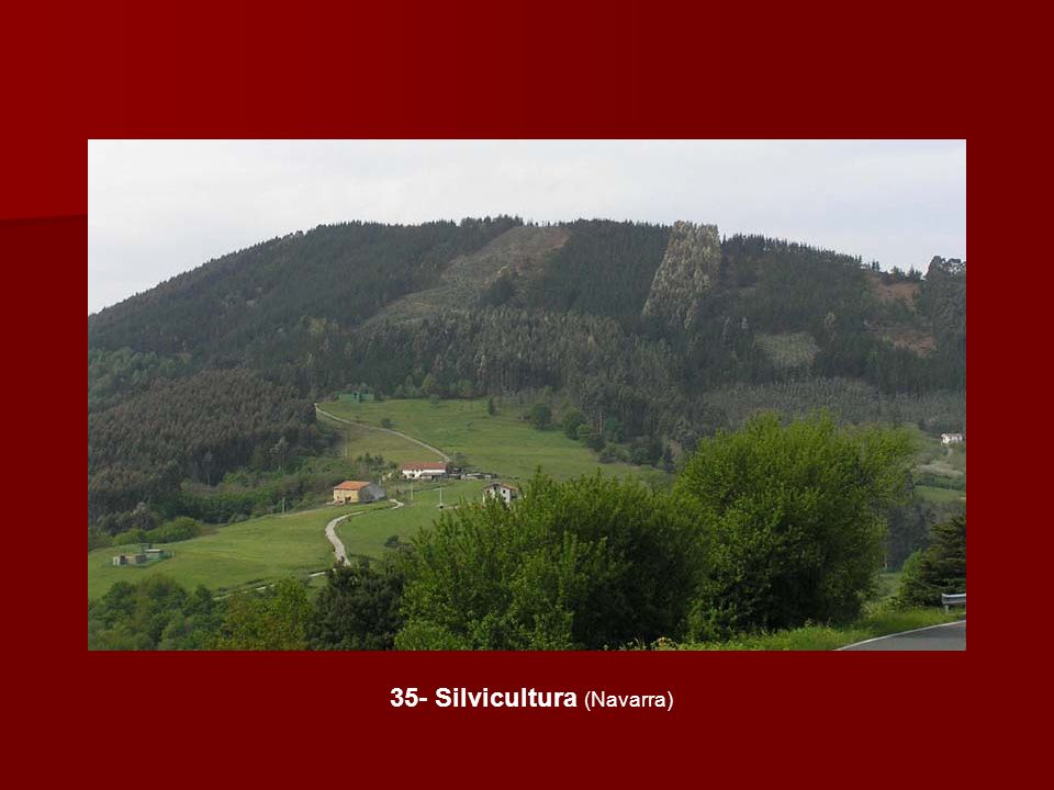 35- Silvicultura (Navarra)