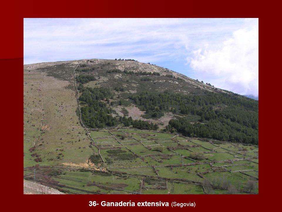 36- Ganadería extensiva (Segovia)