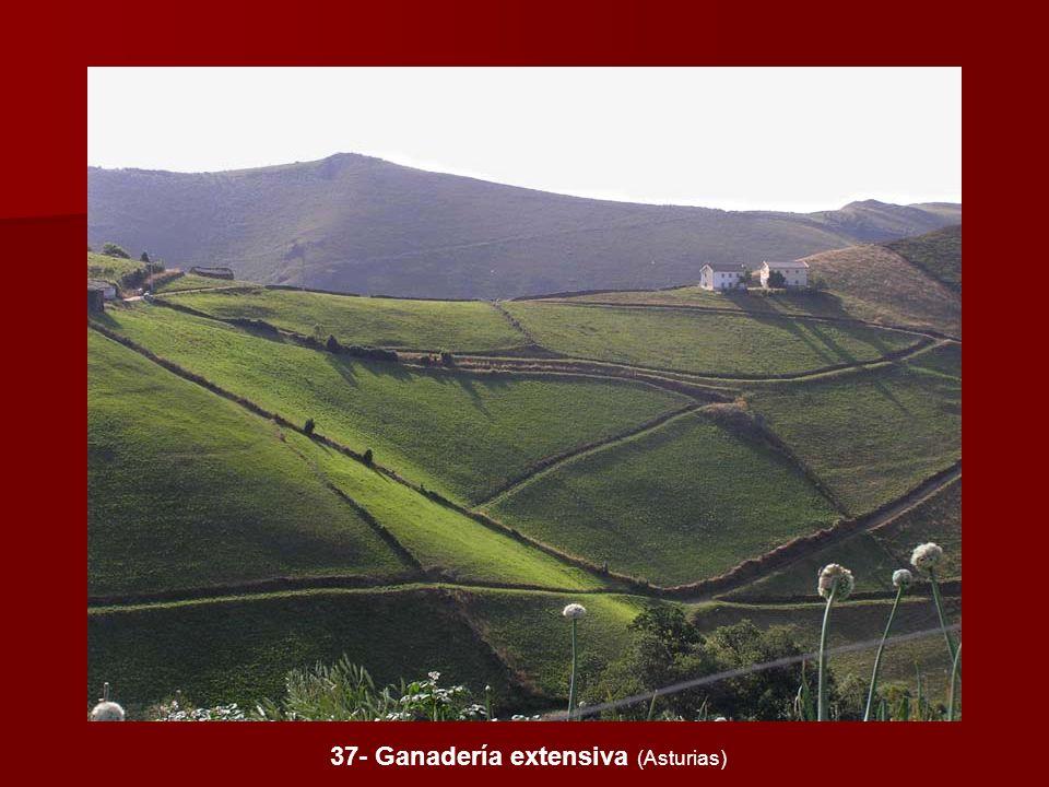 37- Ganadería extensiva (Asturias)