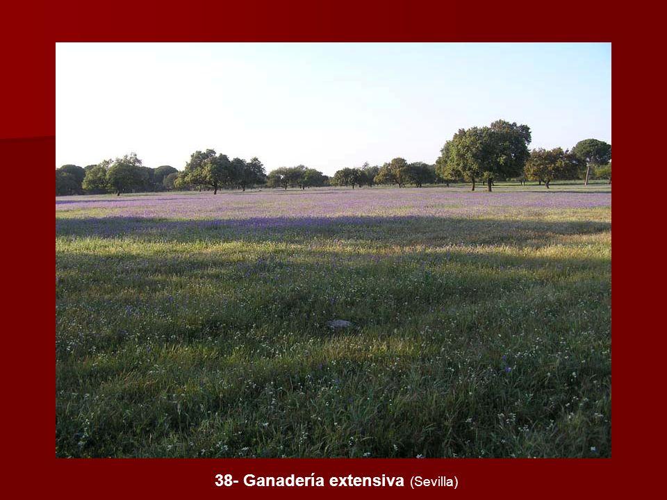 38- Ganadería extensiva (Sevilla)