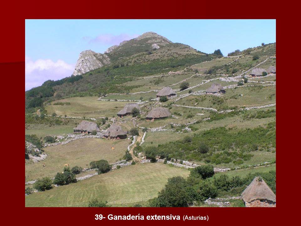 39- Ganadería extensiva (Asturias)