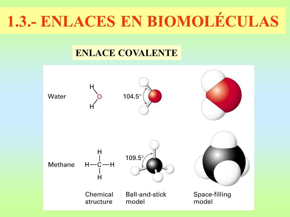 1.3.- ENLACES EN BIOMOLÉCULAS