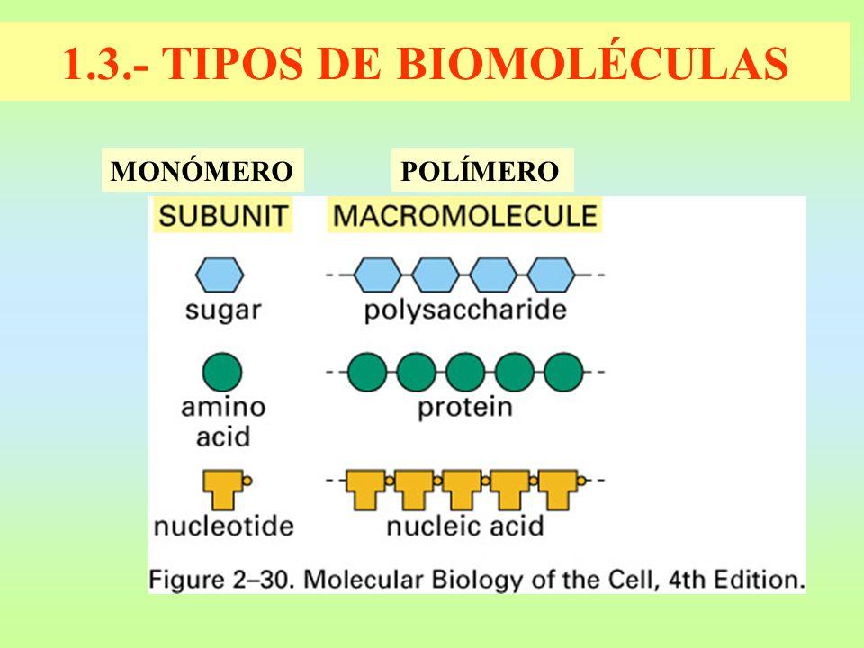 1.3.- TIPOS DE BIOMOLÉCULAS