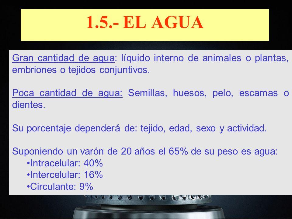 1.5.- EL AGUA Gran cantidad de agua: líquido interno de animales o plantas, embriones o tejidos conjuntivos.