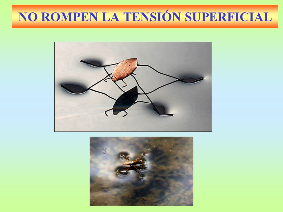 NO ROMPEN LA TENSIÓN SUPERFICIAL
