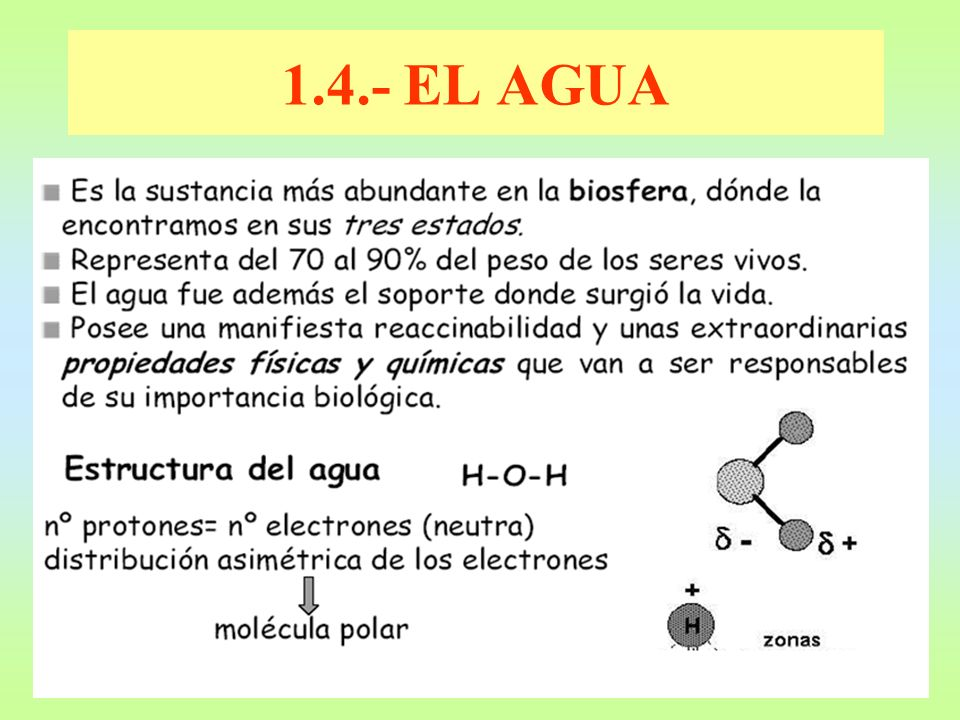 1.4.- EL AGUA