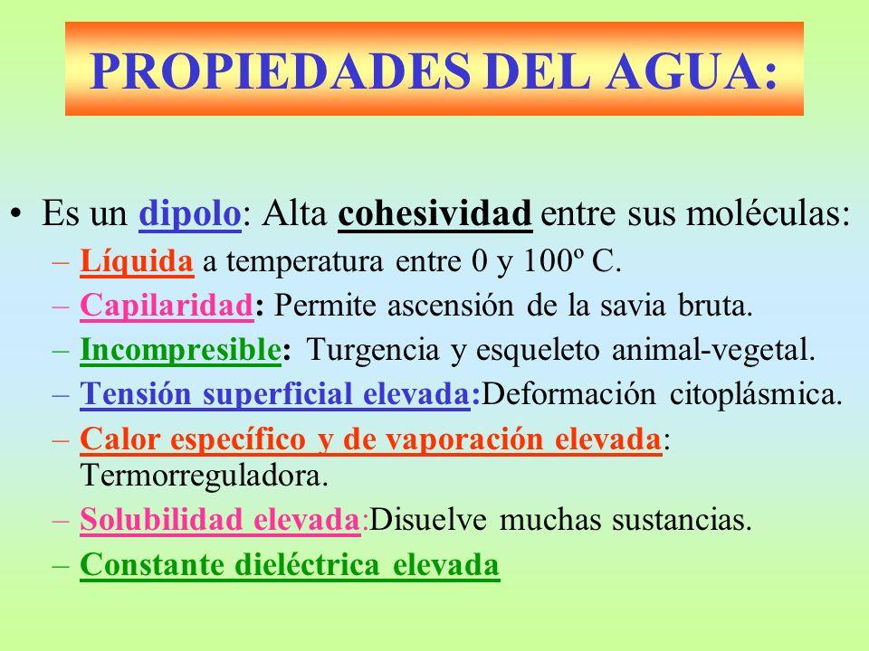 PROPIEDADES DEL AGUA: Es un dipolo: Alta cohesividad entre sus moléculas: Líquida a temperatura entre 0 y 100º C.
