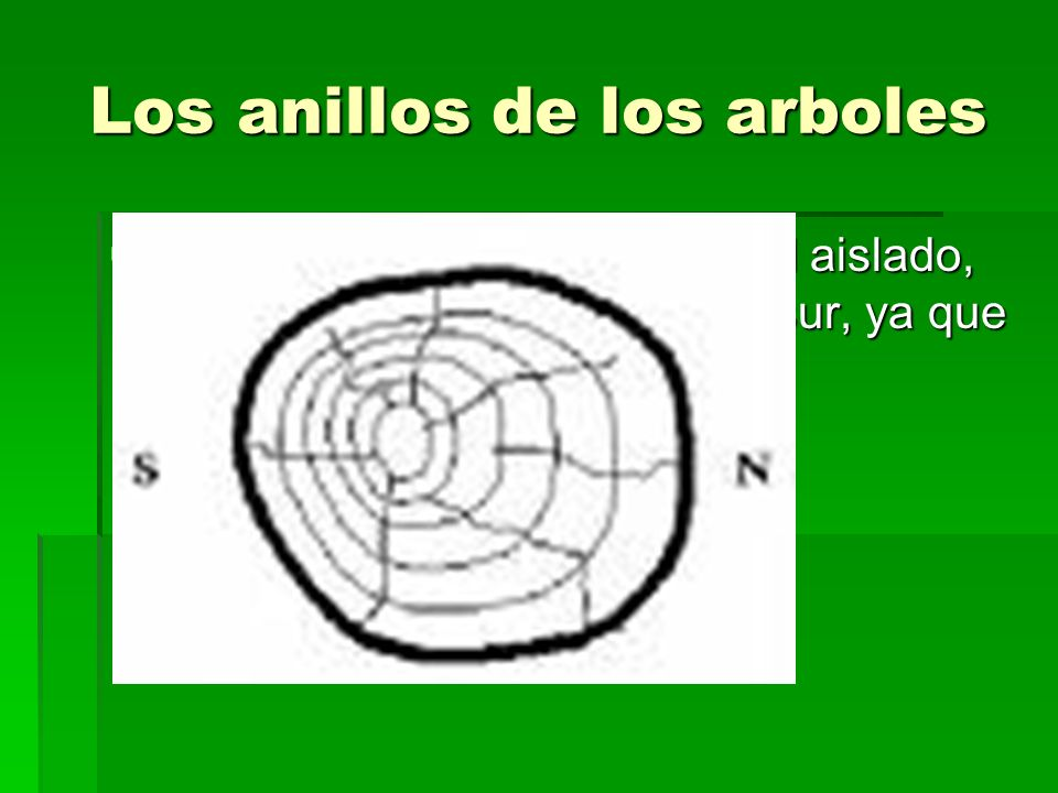 Los anillos de los arboles