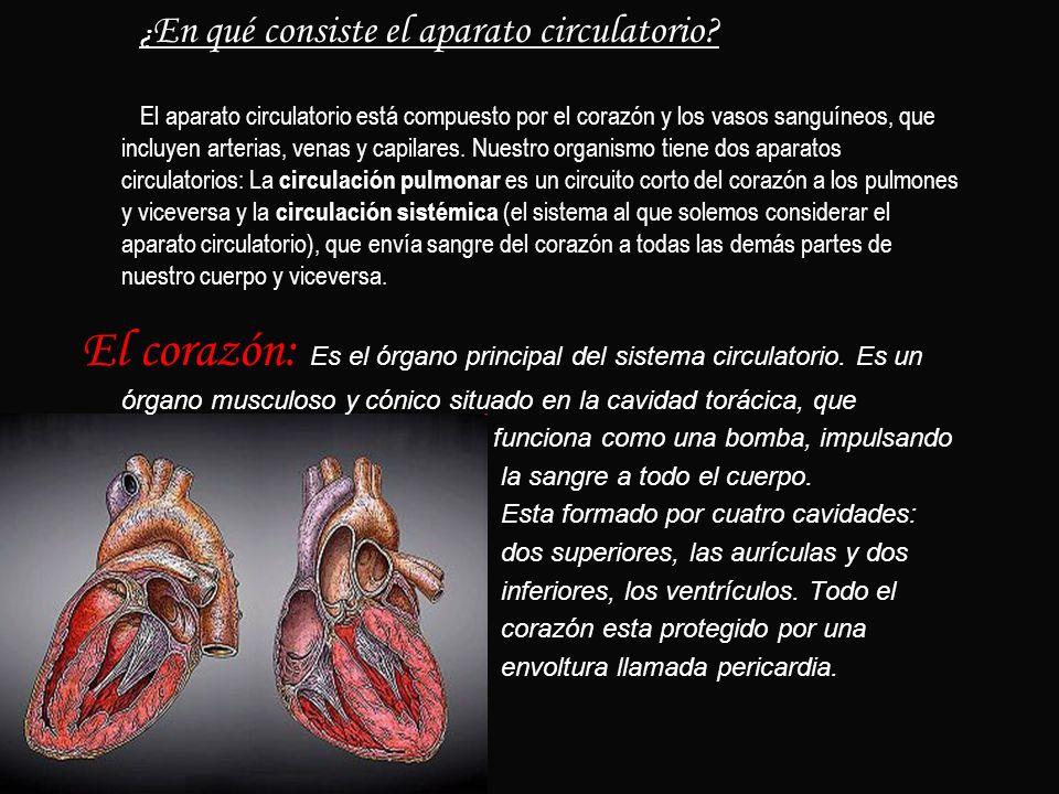 ¿En qué consiste el aparato circulatorio