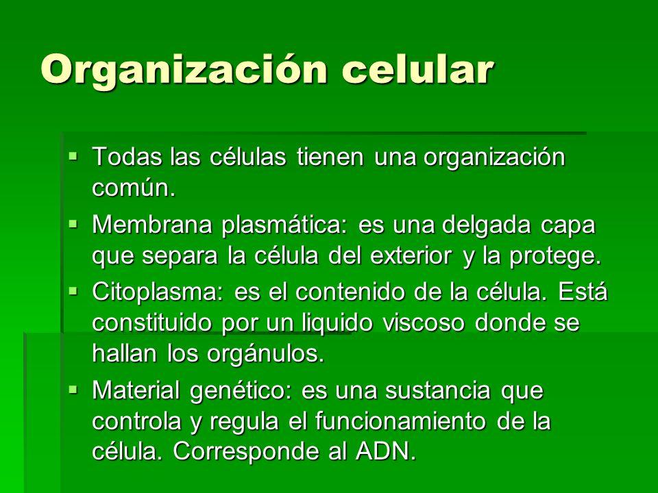 Organización celular Todas las células tienen una organización común.