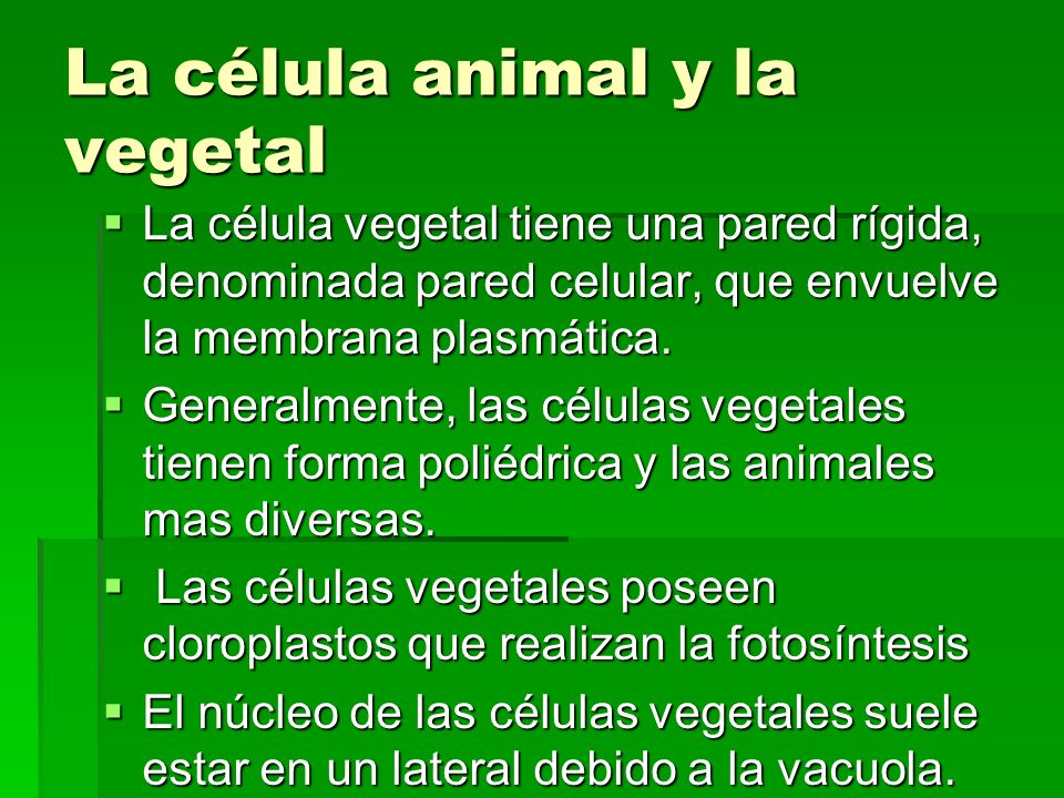 La célula animal y la vegetal