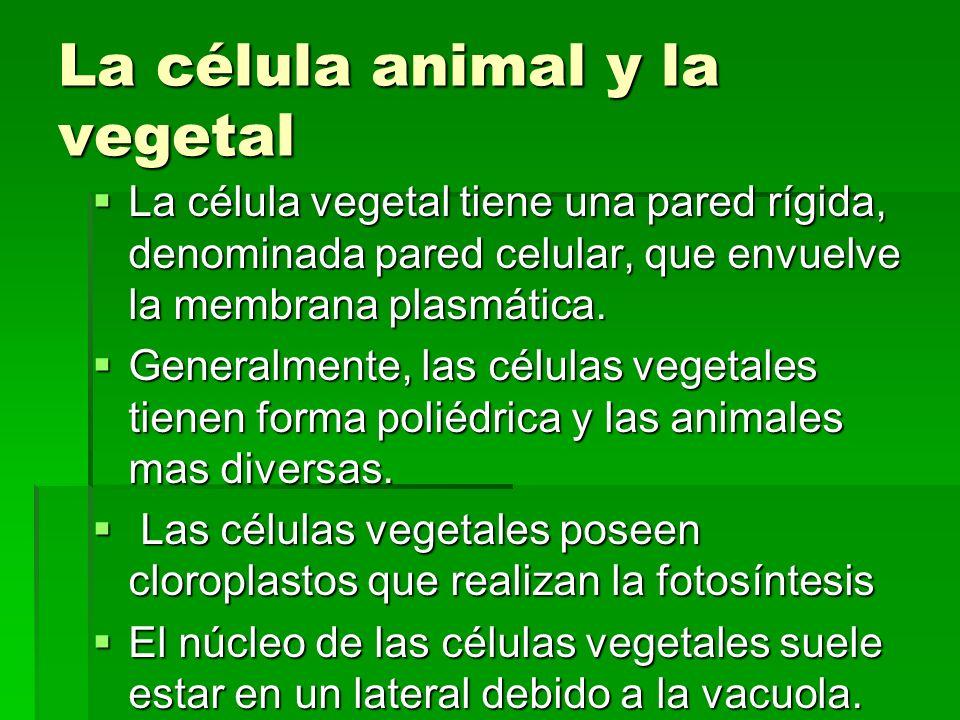 La célula animal y la vegetal