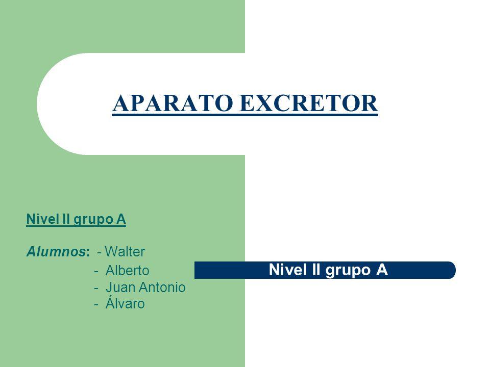 APARATO EXCRETOR Nivel II grupo A Alumnos: - Walter