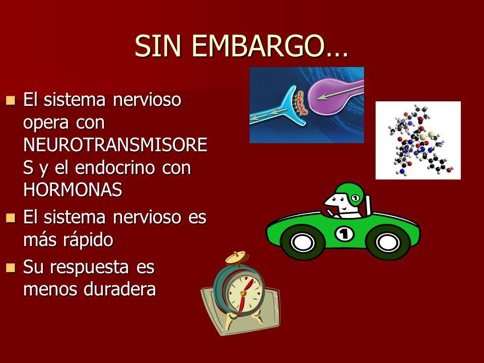 SIN EMBARGO… El sistema nervioso opera con NEUROTRANSMISORES y el endocrino con HORMONAS. El sistema nervioso es más rápido.