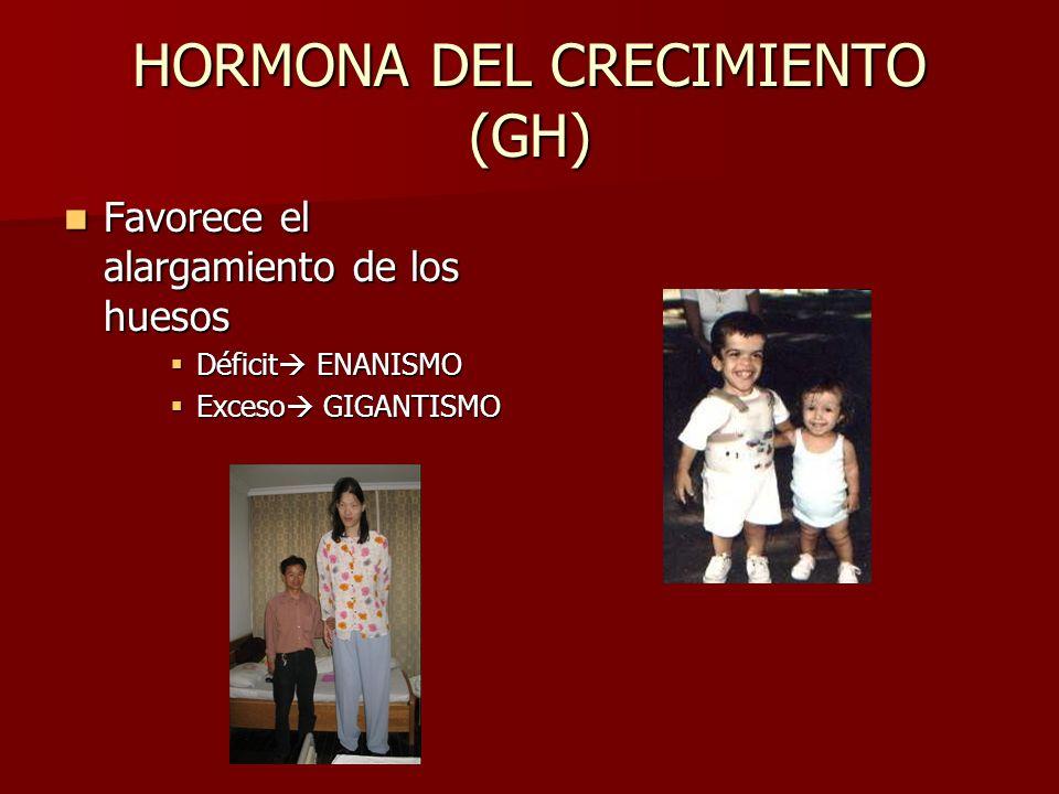 HORMONA DEL CRECIMIENTO (GH)