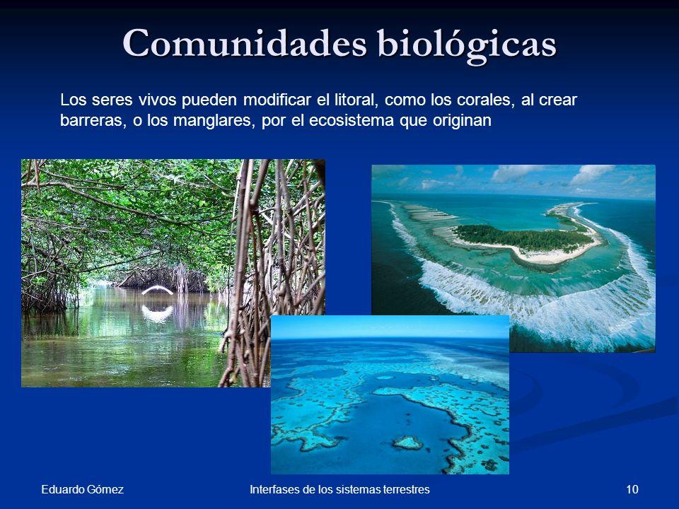 Comunidades biológicas
