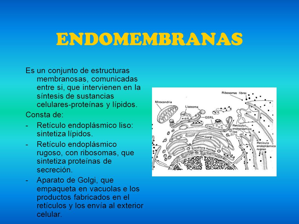 ENDOMEMBRANAS