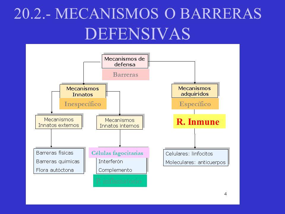 20.2.- MECANISMOS O BARRERAS DEFENSIVAS