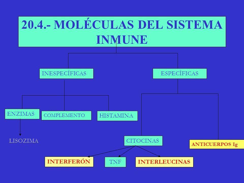 20.4.- MOLÉCULAS DEL SISTEMA INMUNE
