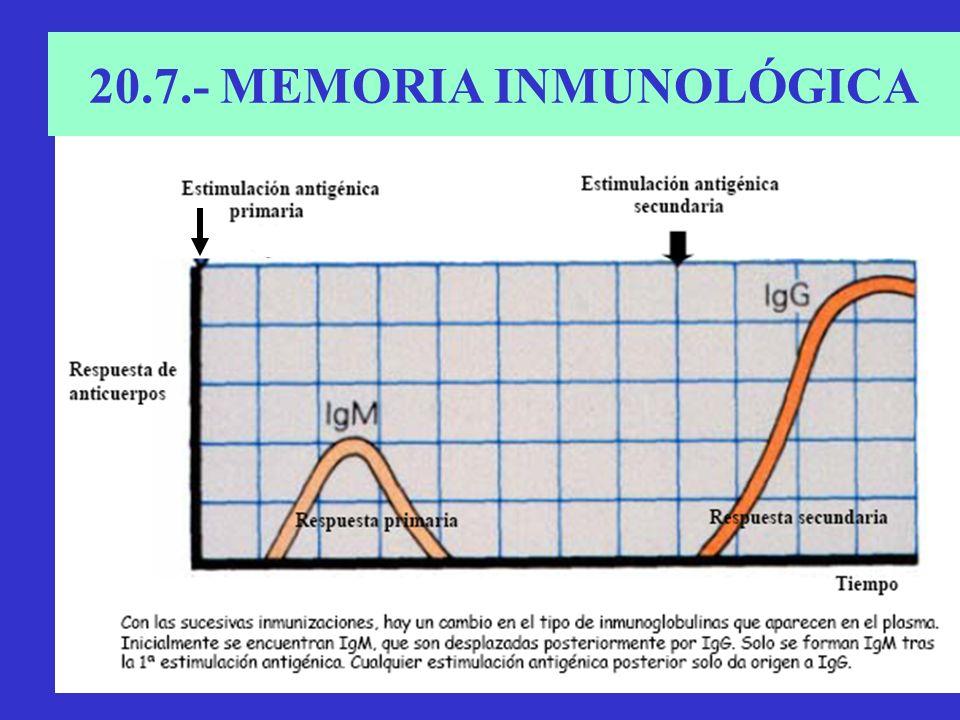 20.7.- MEMORIA INMUNOLÓGICA