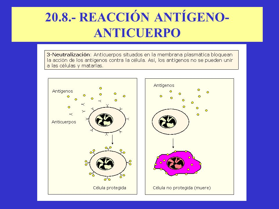 20.8.- REACCIÓN ANTÍGENO-ANTICUERPO