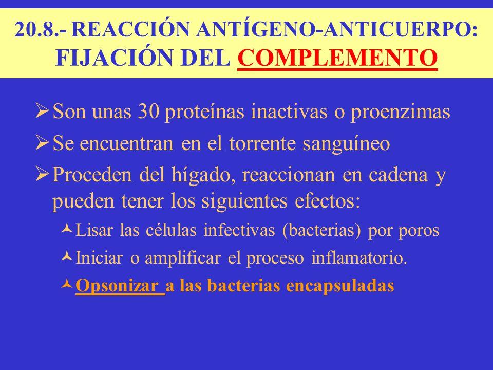 20.8.- REACCIÓN ANTÍGENO-ANTICUERPO: FIJACIÓN DEL COMPLEMENTO