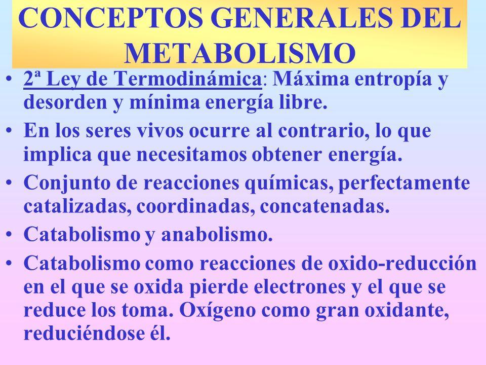 CONCEPTOS GENERALES DEL METABOLISMO