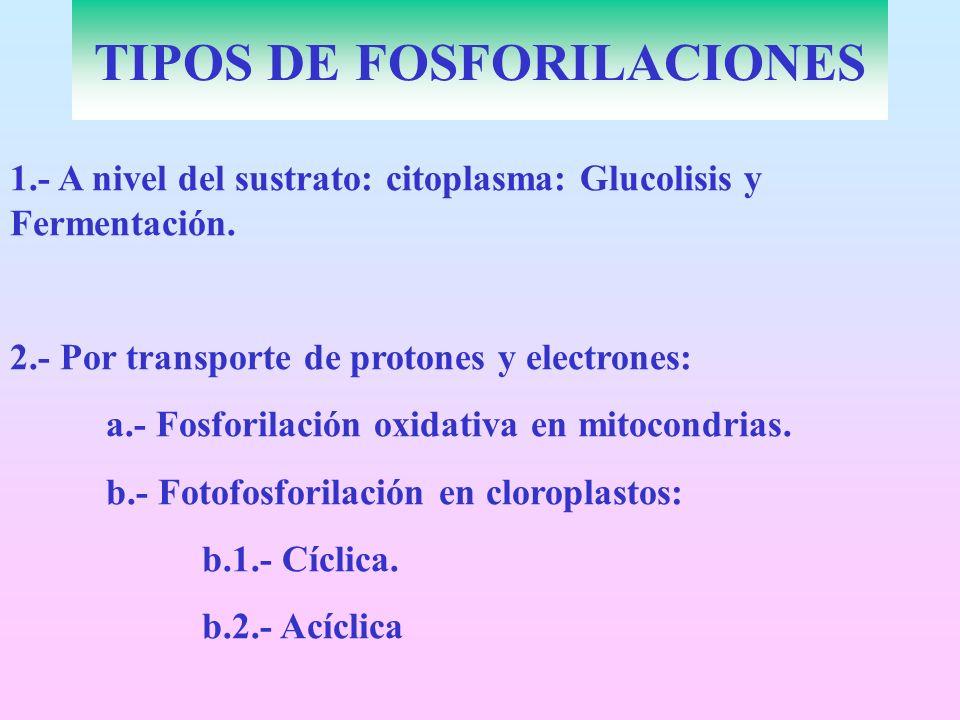 TIPOS DE FOSFORILACIONES