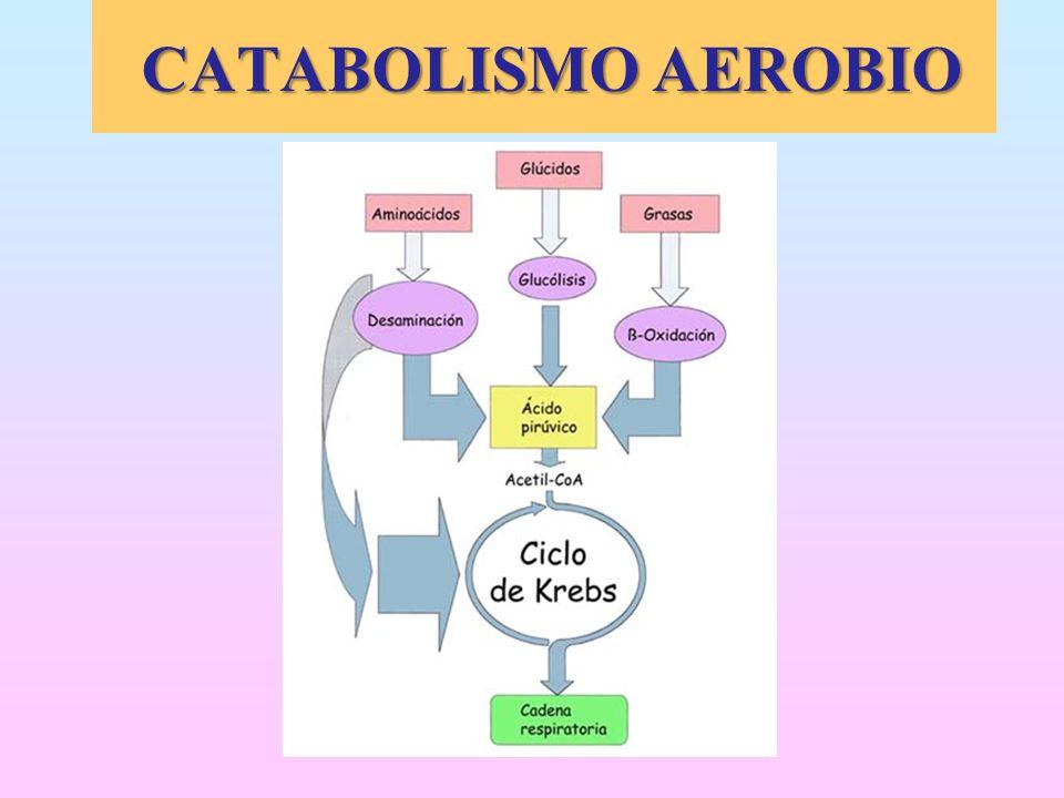 CATABOLISMO AEROBIO