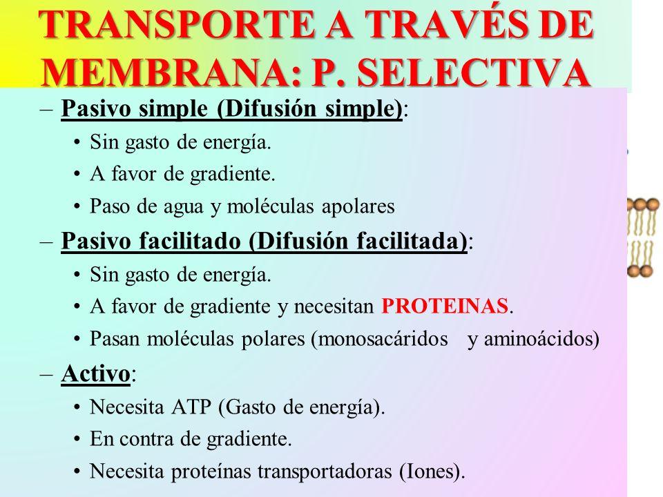 TRANSPORTE A TRAVÉS DE MEMBRANA: P. SELECTIVA