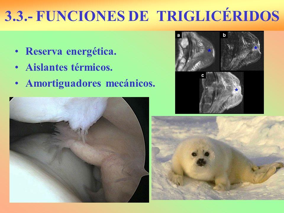 3.3.- FUNCIONES DE TRIGLICÉRIDOS