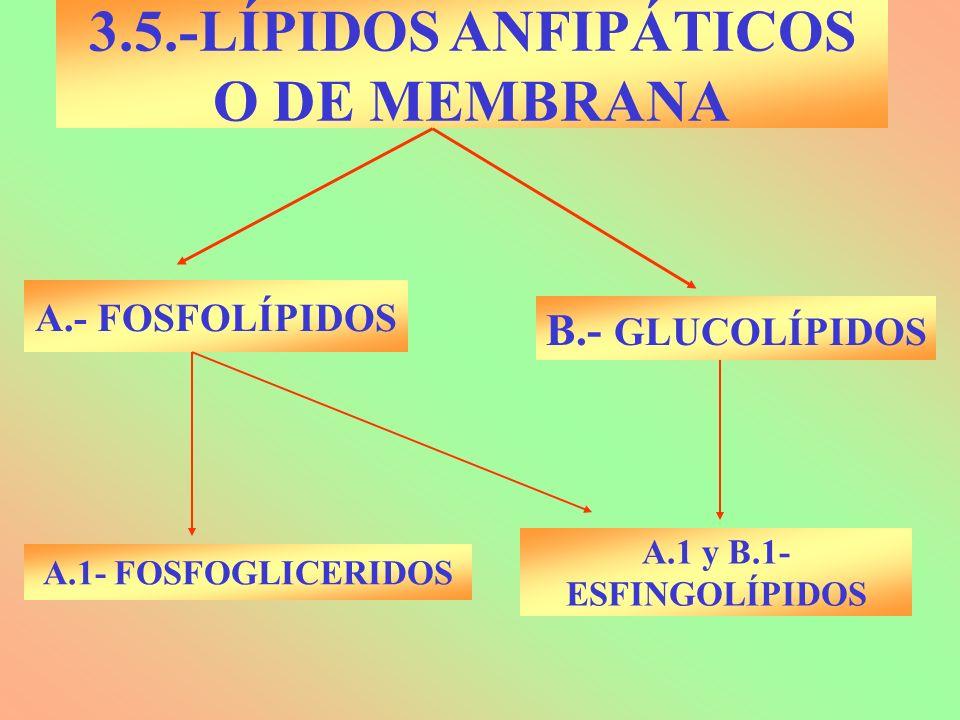 3.5.-LÍPIDOS ANFIPÁTICOS O DE MEMBRANA