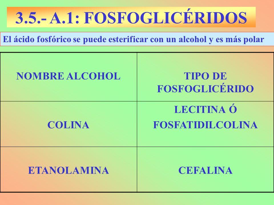 TIPO DE FOSFOGLICÉRIDO