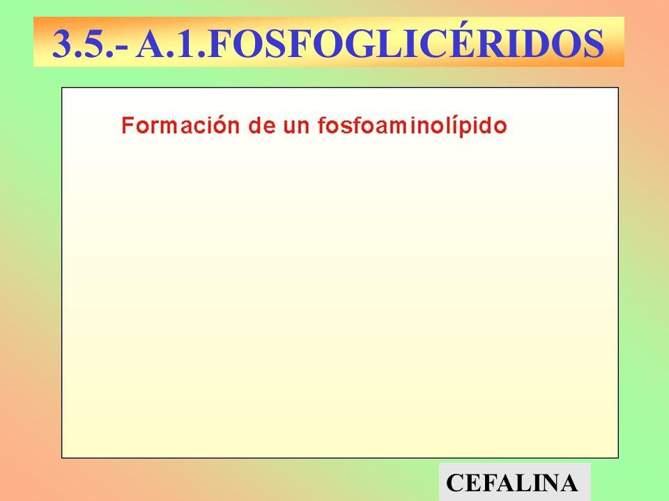 3.5.- A.1.FOSFOGLICÉRIDOS CEFALINA