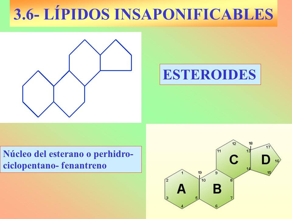 3.6- LÍPIDOS INSAPONIFICABLES