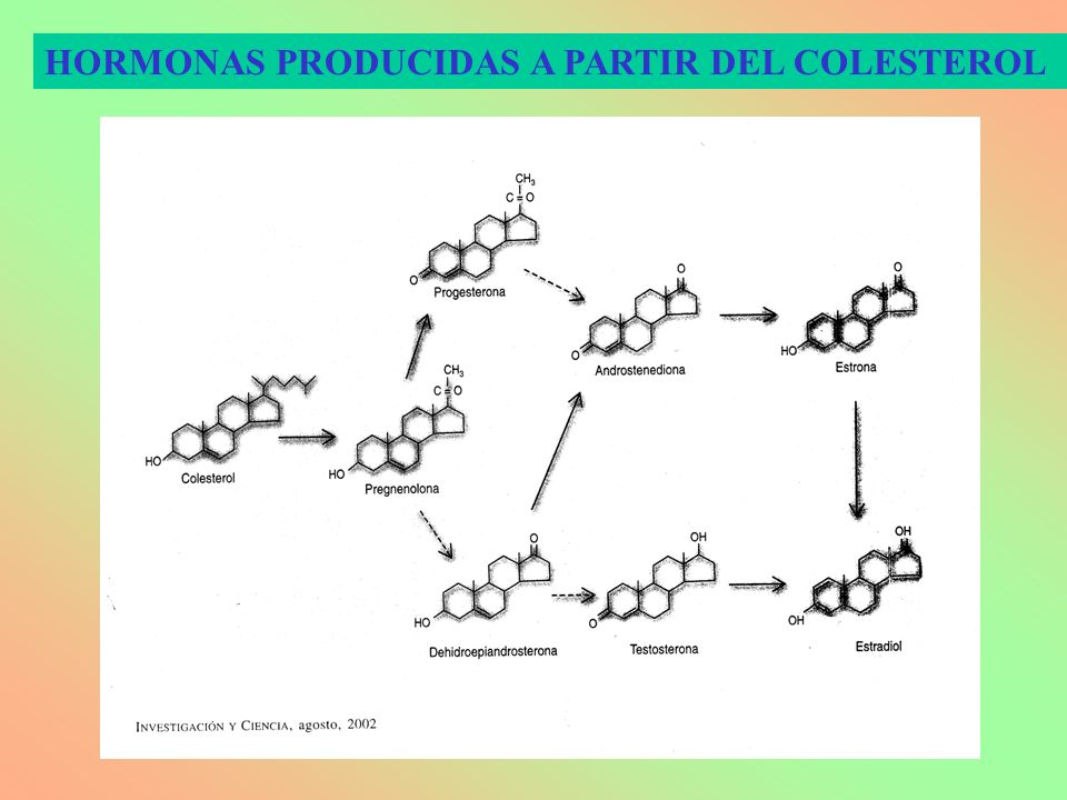 HORMONAS PRODUCIDAS A PARTIR DEL COLESTEROL