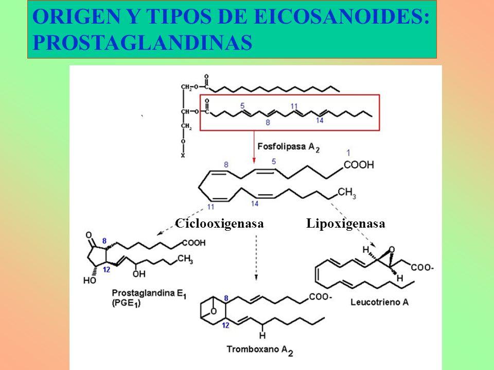 ORIGEN Y TIPOS DE EICOSANOIDES: PROSTAGLANDINAS