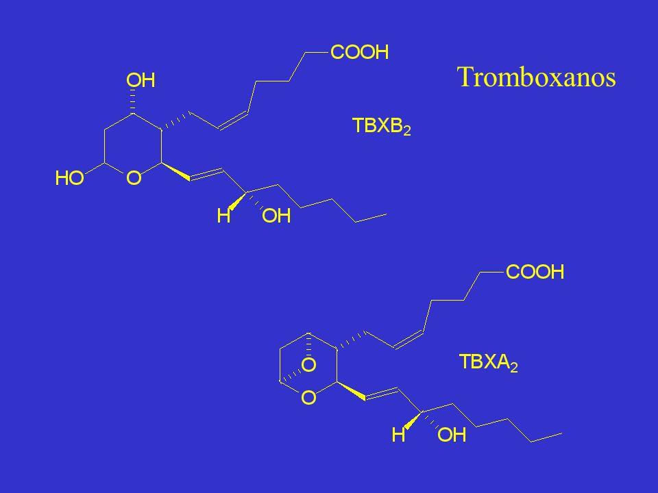 Tromboxanos