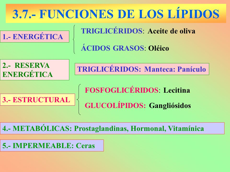 3.7.- FUNCIONES DE LOS LÍPIDOS