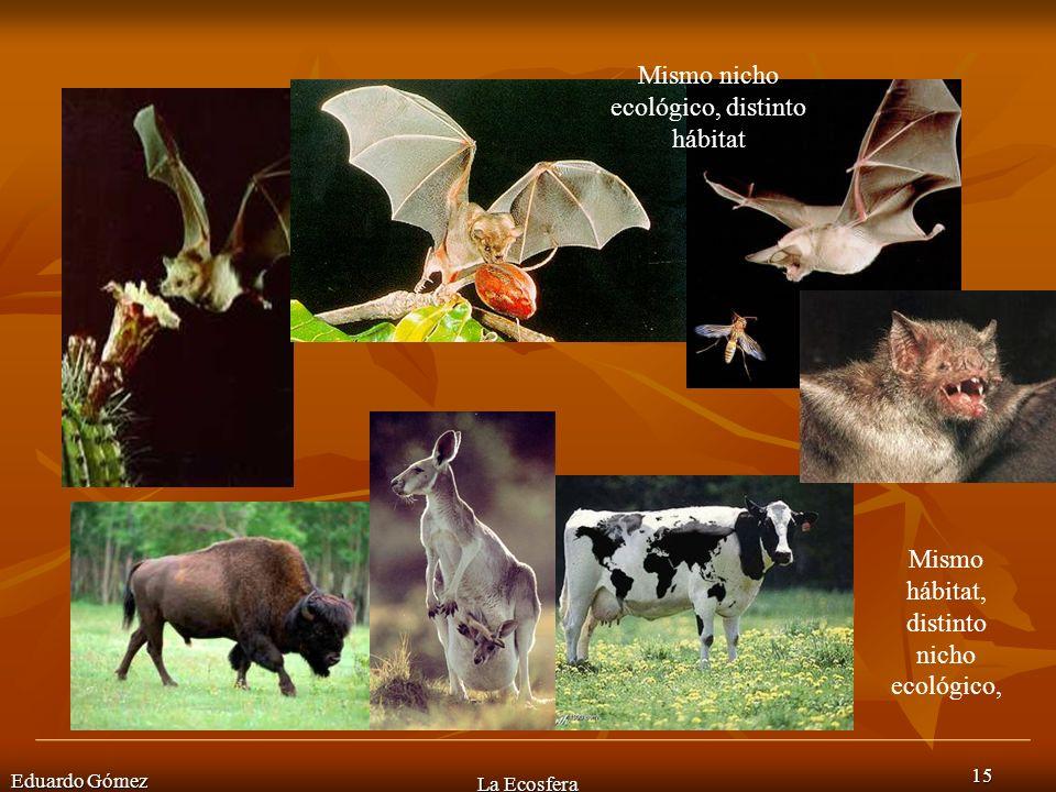 u Mismo nicho ecológico, distinto hábitat Mismo hábitat, distinto