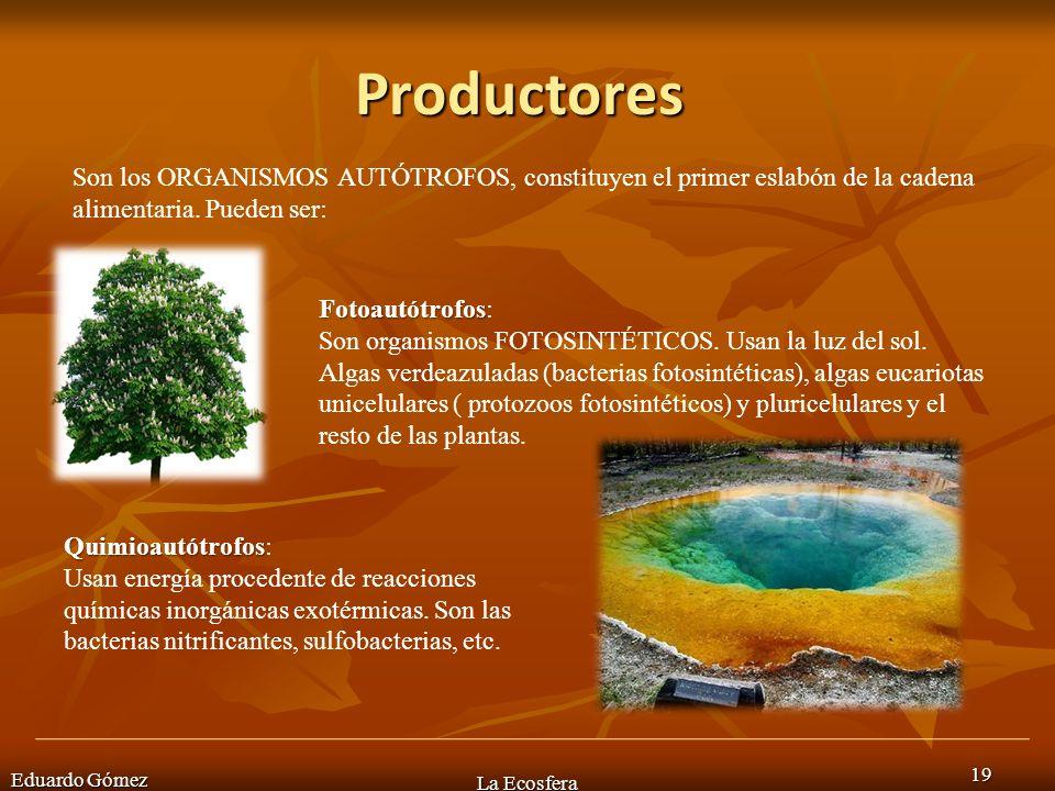 Productores Son los ORGANISMOS AUTÓTROFOS, constituyen el primer eslabón de la cadena alimentaria. Pueden ser: