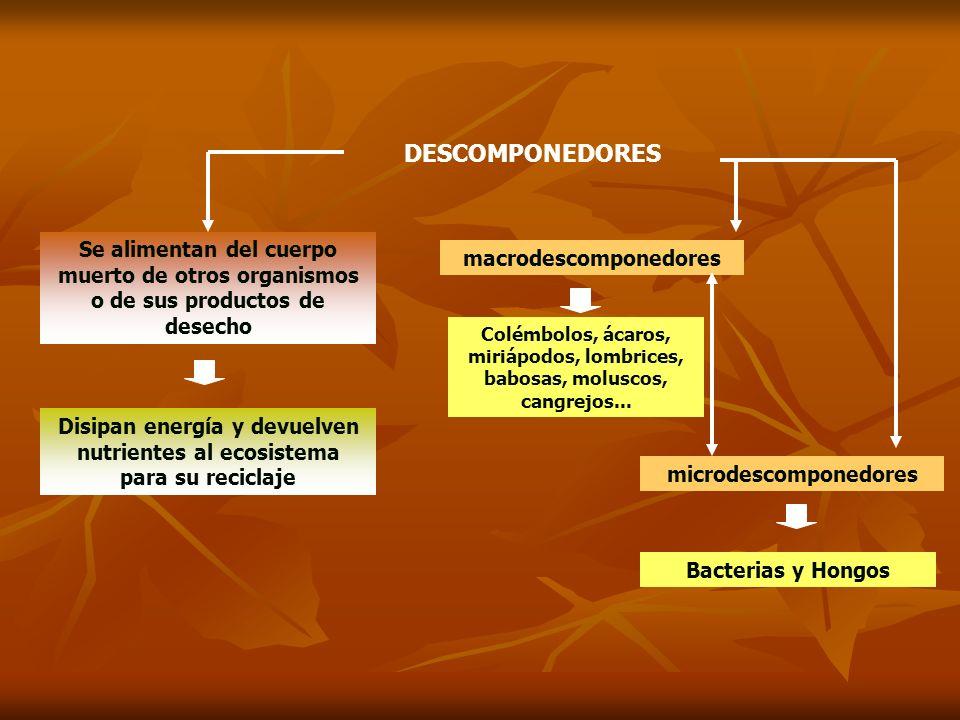 DESCOMPONEDORES Se alimentan del cuerpo muerto de otros organismos o de sus productos de desecho. macrodescomponedores.