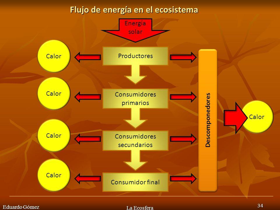Flujo de energía en el ecosistema