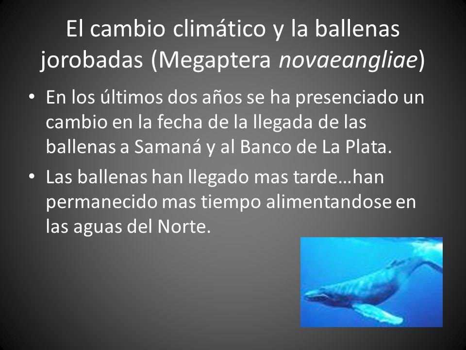 El cambio climático y la ballenas jorobadas (Megaptera novaeangliae)